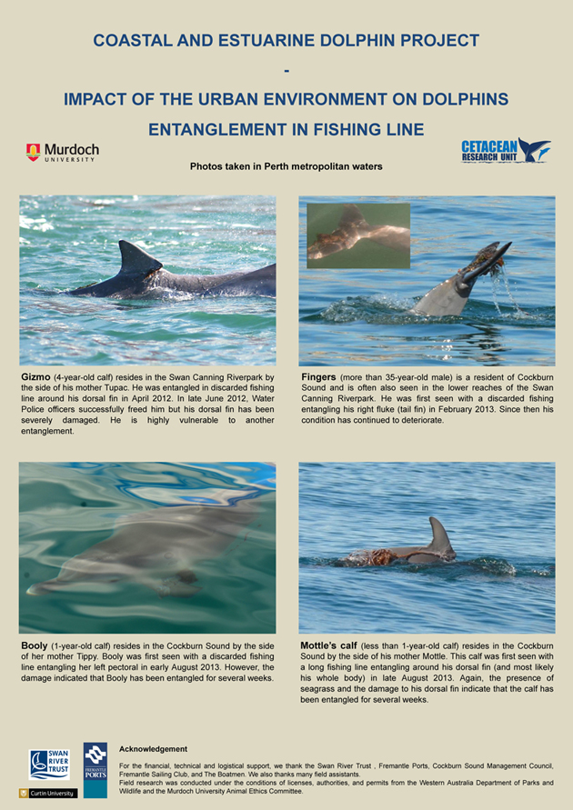 Impact of the urban development on dolphins - Entanglement in fishing line