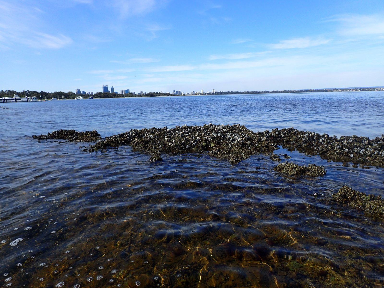 Community Forum - Swan-Canning Estuary Mussel Reef Project
