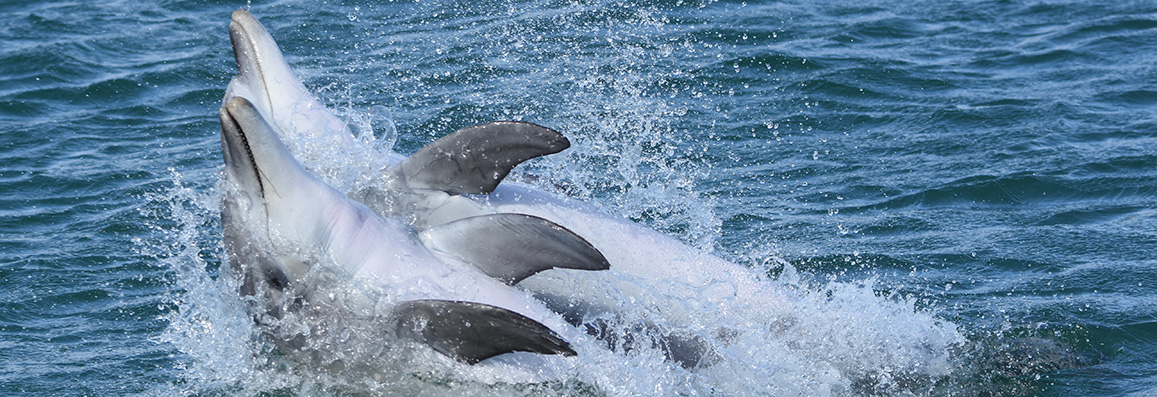 Free Dolphin Watch training event in Perth