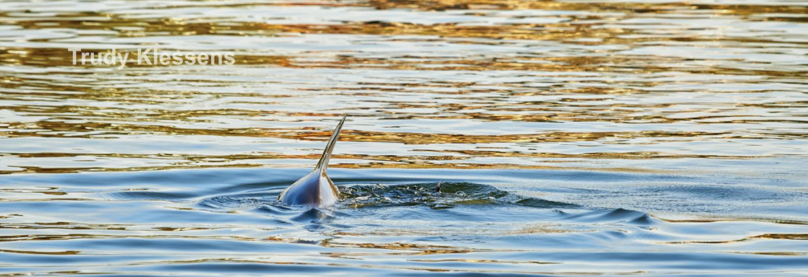Learn about Perth's dolphins - 5 August