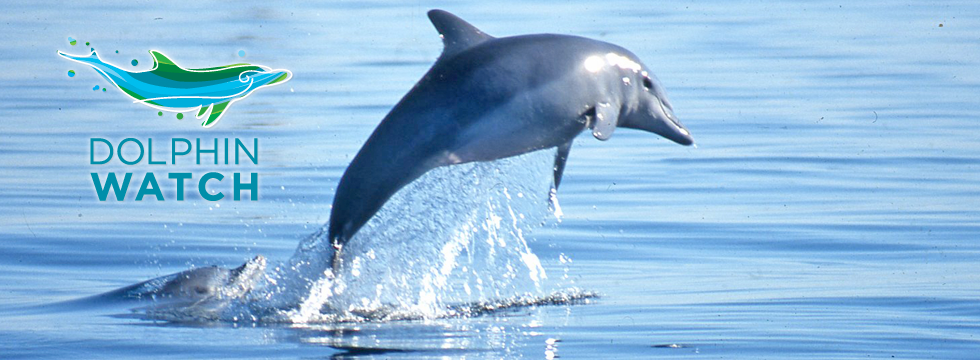 Register for Dolphin Watch training - 16 October